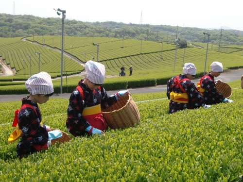 Ube City eighty-eighth day from the setting-in of spring Tea Festival