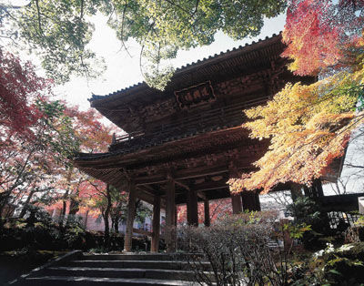 Kouzan-ji Temple / maple