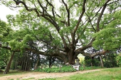 가와타나 녹나무 숲