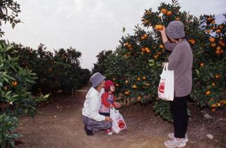 ฟาร์มคิวซัง/ส้ม