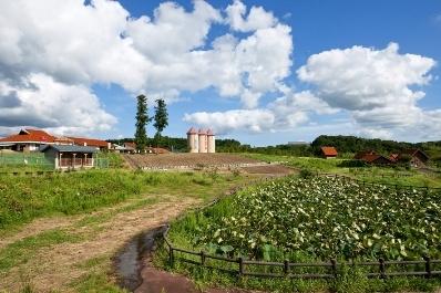 토요타 농업 공원 미노리의 언덕/배・딸기