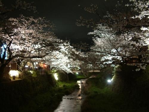 一坂川樱花的上灯