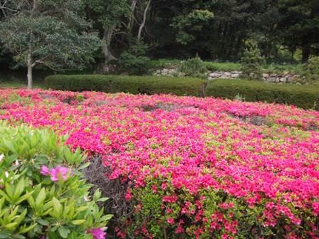 石雕公园/杜鹃花