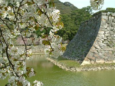 하기 성터ㆍ시즈키 공원/벚꽃
