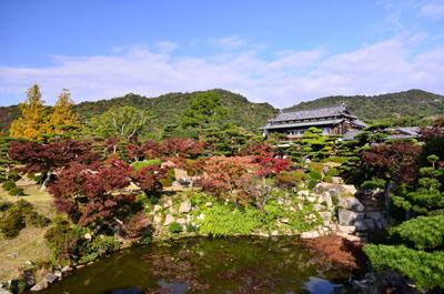 모리 가문 정원/단풍