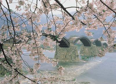 Kikko Park, Kintai Bridge / cherry tree
