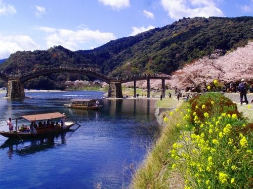 """春天的觀光船""""櫻花船"""""""