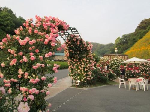 第10次玫瑰花節日