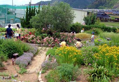 びじゅつかんの Herb garden / lavender