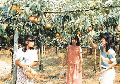 没有濑田农场/的葡萄、苹果