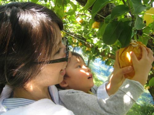 Sugane Fruits Land