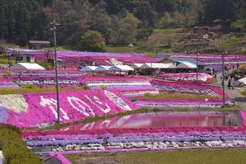 Odori ground pink Festival