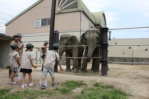 德山動物園動物接觸程序小孩守門員