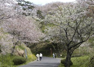 류오산 공원/벚꽃