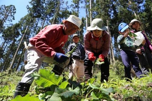 自然观察和山菜采摘