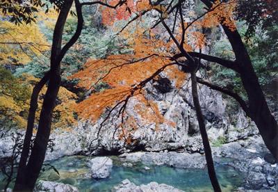 長門峽/楓葉