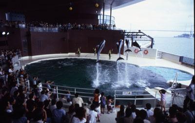 2. Shimonoseki Municipal Aquarium  Kaikyokan