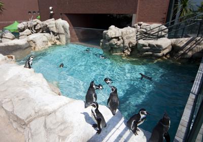 3. Shimonoseki Municipal Aquarium  Kaikyokan