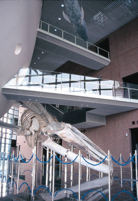 4. Shimonoseki Municipal Aquarium  Kaikyokan