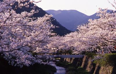1. แม่น้ำอิจิโนะซากะคาวะ