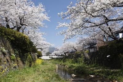 2. แม่น้ำอิจิโนะซากะคาวะ