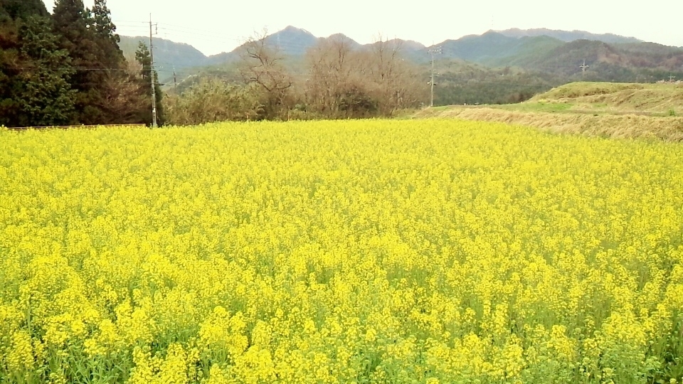 3. Himawari Road