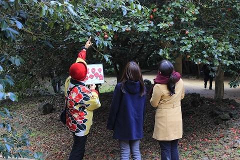 2. Hagi・Camellia Festival
