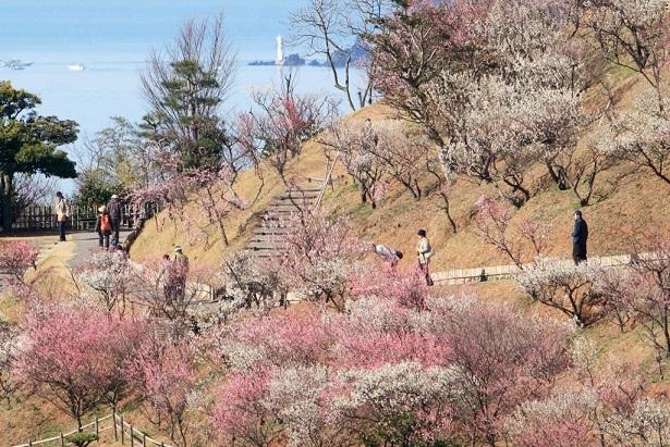 1. Kanmuriyama Park Plum Blossom Festival