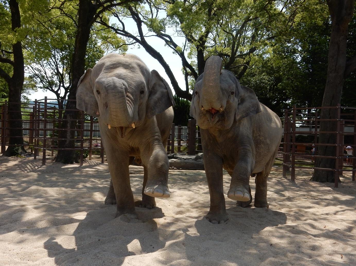 1. 周南市德山動物園