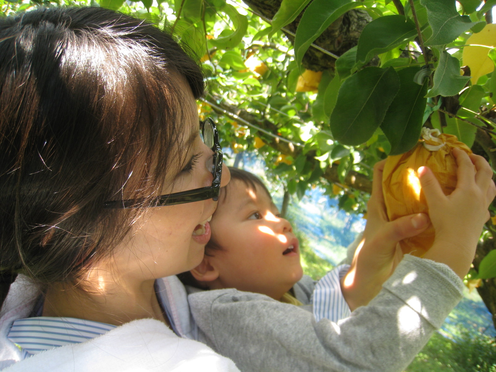 1. Sugane Fruit Land / Pear, Grapes