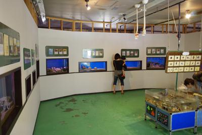 2. 海邊水族館