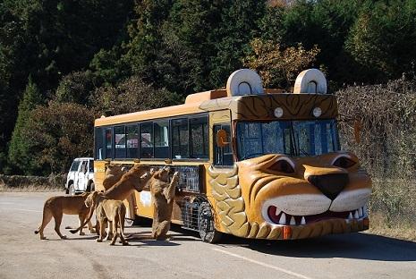 秋吉台Safari Land(秋吉台自然动物公园)