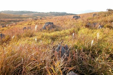 3. Akiyoshidai Plateau leaves of grass putting on autumnal tints
